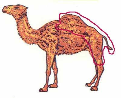 sol-camello.jpg