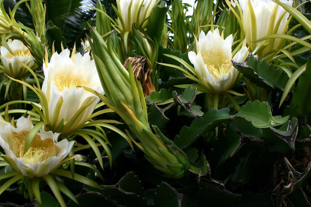 Acertijos animales escondidos acertijos y mas cosas - Flowers that bloom only at night ...